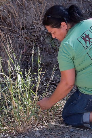Vicki Salazar checks out an unknown grass. ©Nancy Hamlett.