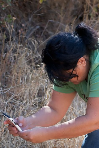 Vicki Salazar records an invasive plant occurrence with the CalFlora Observer Pro iPhone app. ©Nancy Hamlett.