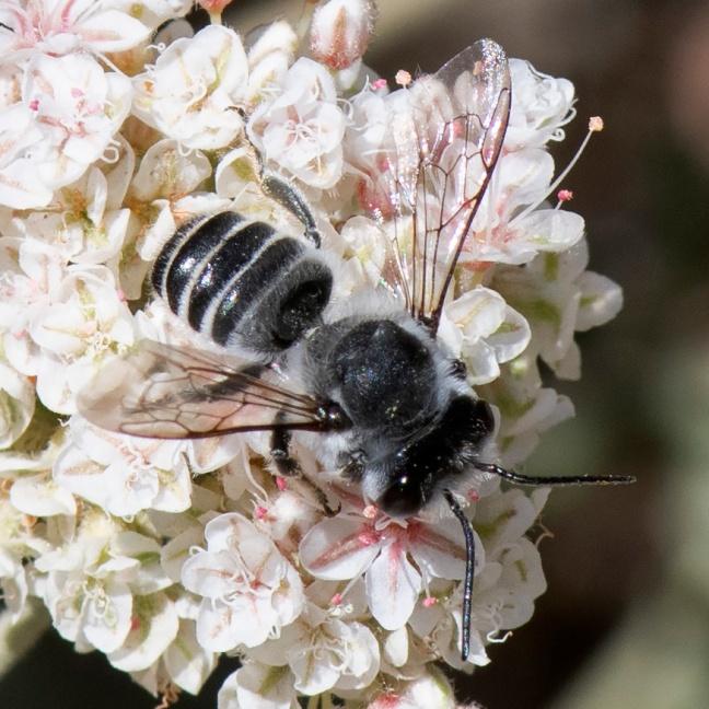 Bee-071319-4151.jpg